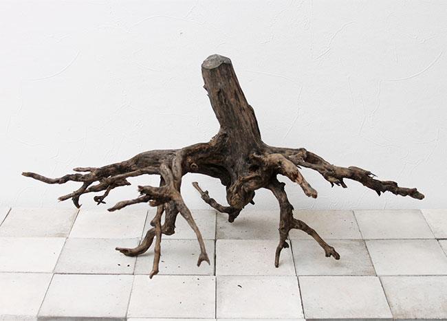 Drift Wood / ドリフトウッド 【 ブラック / 3L / DW-2006-76 】 [ パルダリウム、コケリウムのレイアウトに最適な流木 ]