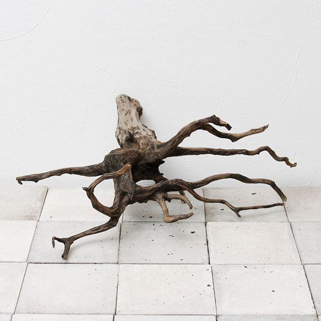 Drift Wood / ドリフトウッド 【 ブラック / L / DW-2006-66 】 [ パルダリウム、コケリウムのレイアウトに最適な流木 ]