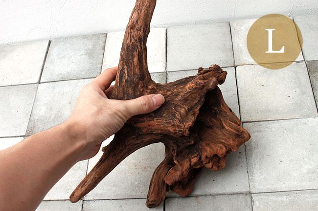 Drift Wood / ドリフトウッド 【 マングローブ / L  】 【 MG0016 】