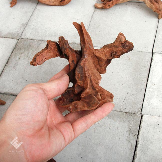 Drift Wood / ドリフトウッド 【 マングローブ / SS / 3本 】 [ パルダリウム、コケリウムのレイアウトに最適な流木 ]