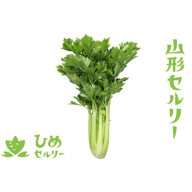【春作】山形セルリー(ひめセルリー) 10株
