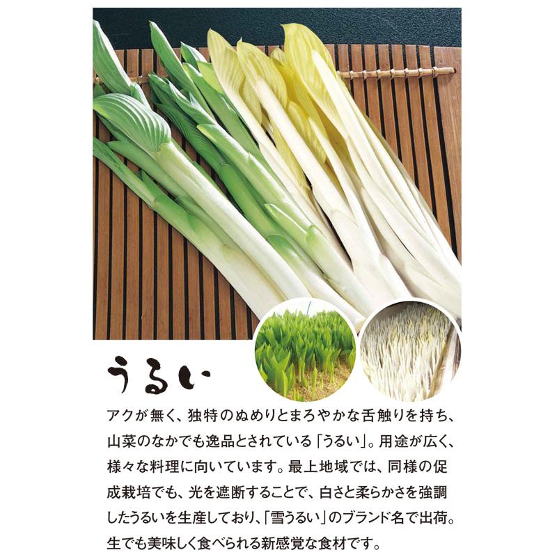 やまがた山菜セット〜ひと足早い春の味覚〜